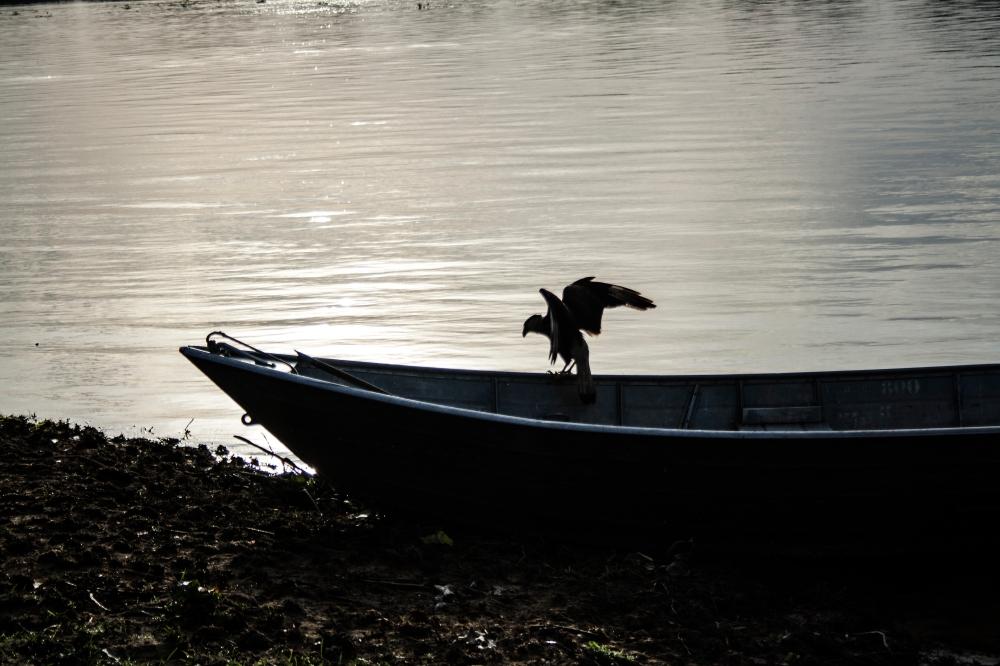 Pantanal11