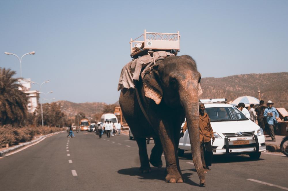 Trägerelefant