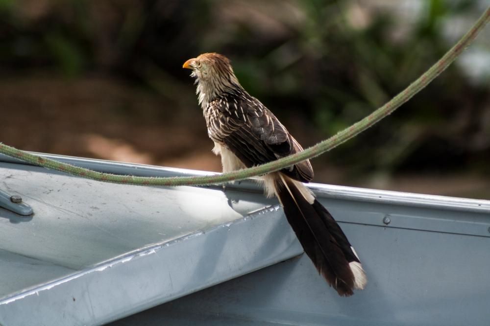 Vogel_Pantanal