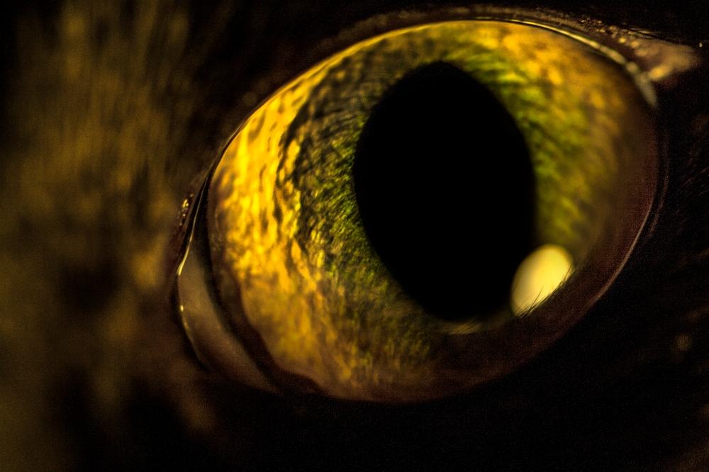 Auge_Lotta