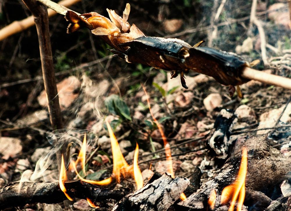 Pantanal_Piranha-Grillen
